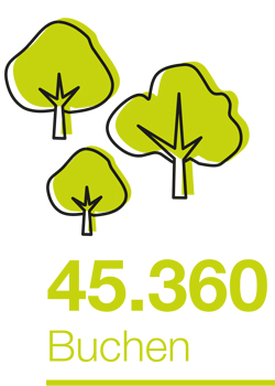 45360 Buchen Bäume